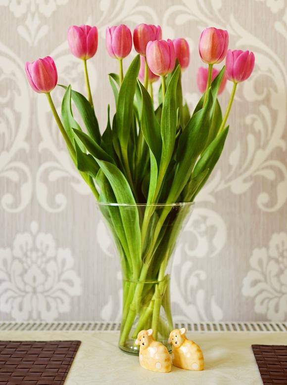 Tulipany Ankyls