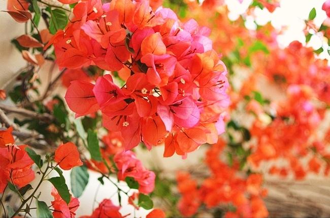 floral6cc